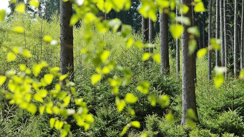 Cum ne ajuta natura inconjuratoare